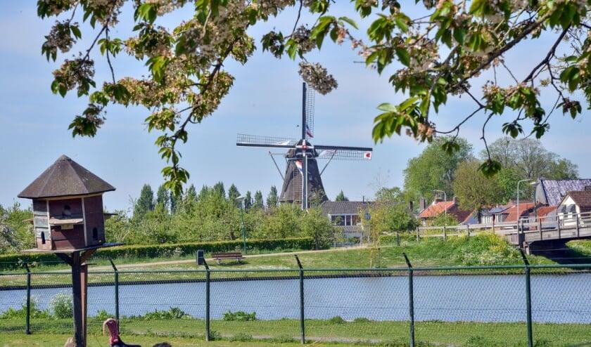 <p>Molen De Valk gezien vanuit de Kinderboerderij in Stadspark Montfoort.</p>