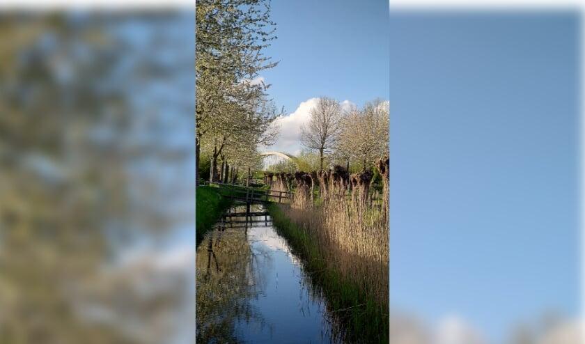 Ik vond het mooi om de laatste bloesems op de foto te zetten in combinatie met de karakteristieke spoorbrug. Bovendien zie je de bomen en de wolkenpartijen prachtig gespiegeld in het water van het slootje.