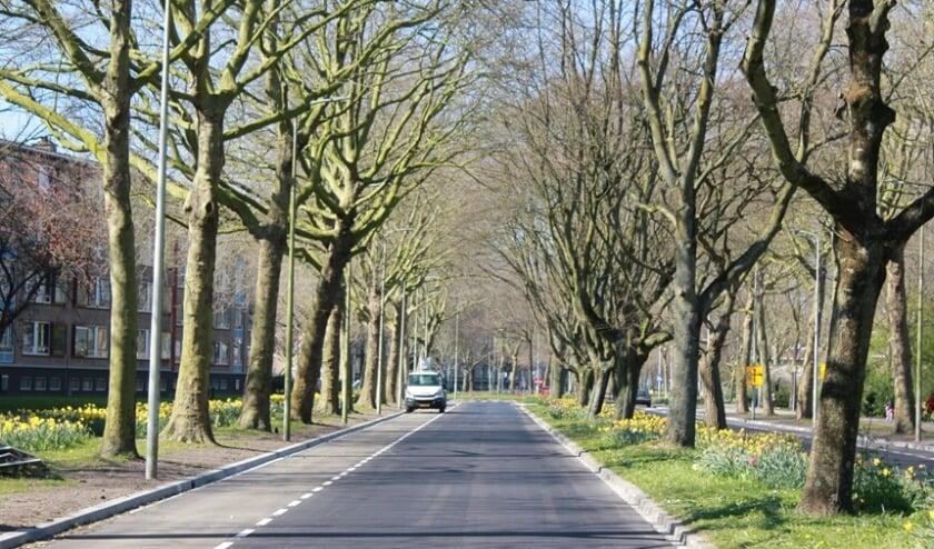 <p>Hele vele groen is kenmerkend voor de na-oorlogse wijk Mariahoeve</p>