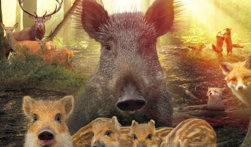 <p>In de film WILD zien we spectaculaire beelden van het wildleven op de Veluwe.</p>