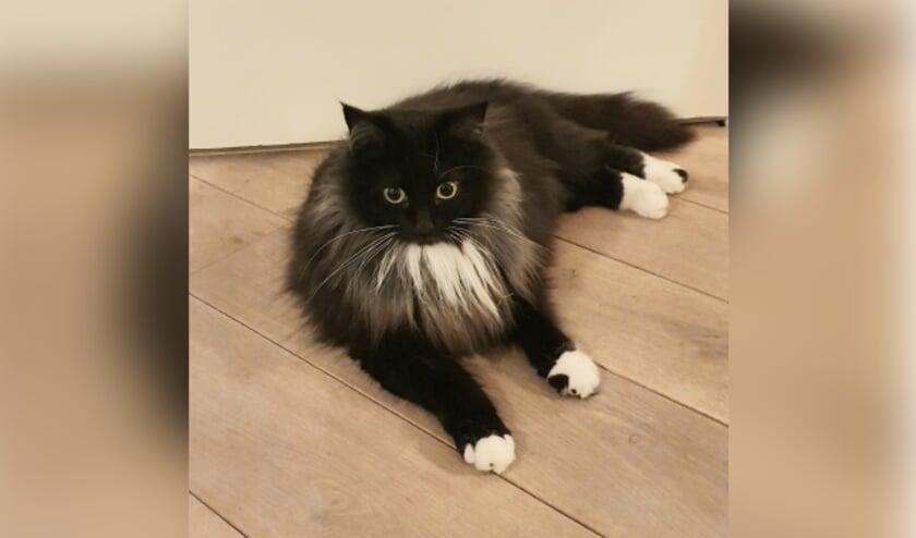 Vermiste kat Zeeweg Ermelo