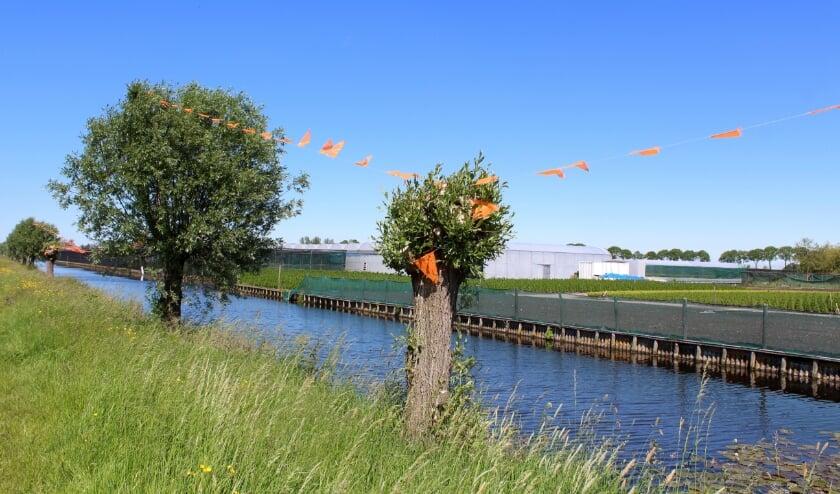 <p>Vier Boskoopse kwekerszonen hingen anderhalve kilometer aan vlaggetjes in de polder.</p>