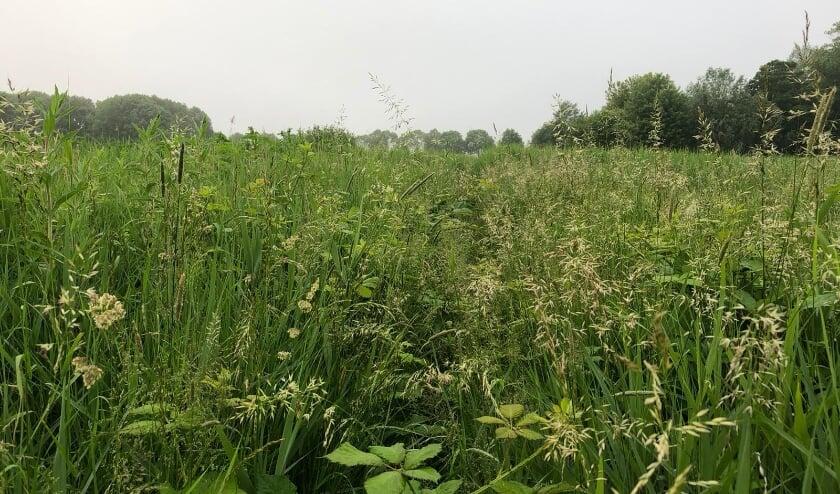 <p>GroenLinks roept Rijswijk op: &ldquo;laat leefbaarheid, natuur en welzijn geen sluitstuk, maar vertrekpunten zijn.&rdquo;&nbsp;</p>
