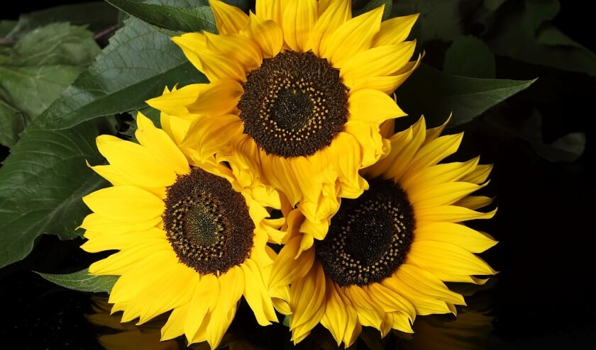 <p>Met de opbrengst van de loterij kan de zonnebloem voor de gasten een gezellige middag of een dagje uit financieren.</p>