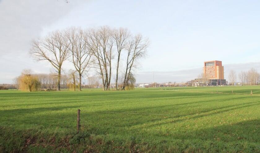 <p>De Ploen-Noord: nu nog weiland, over enkele jaren waarschijnlijk een woonwijk.</p>
